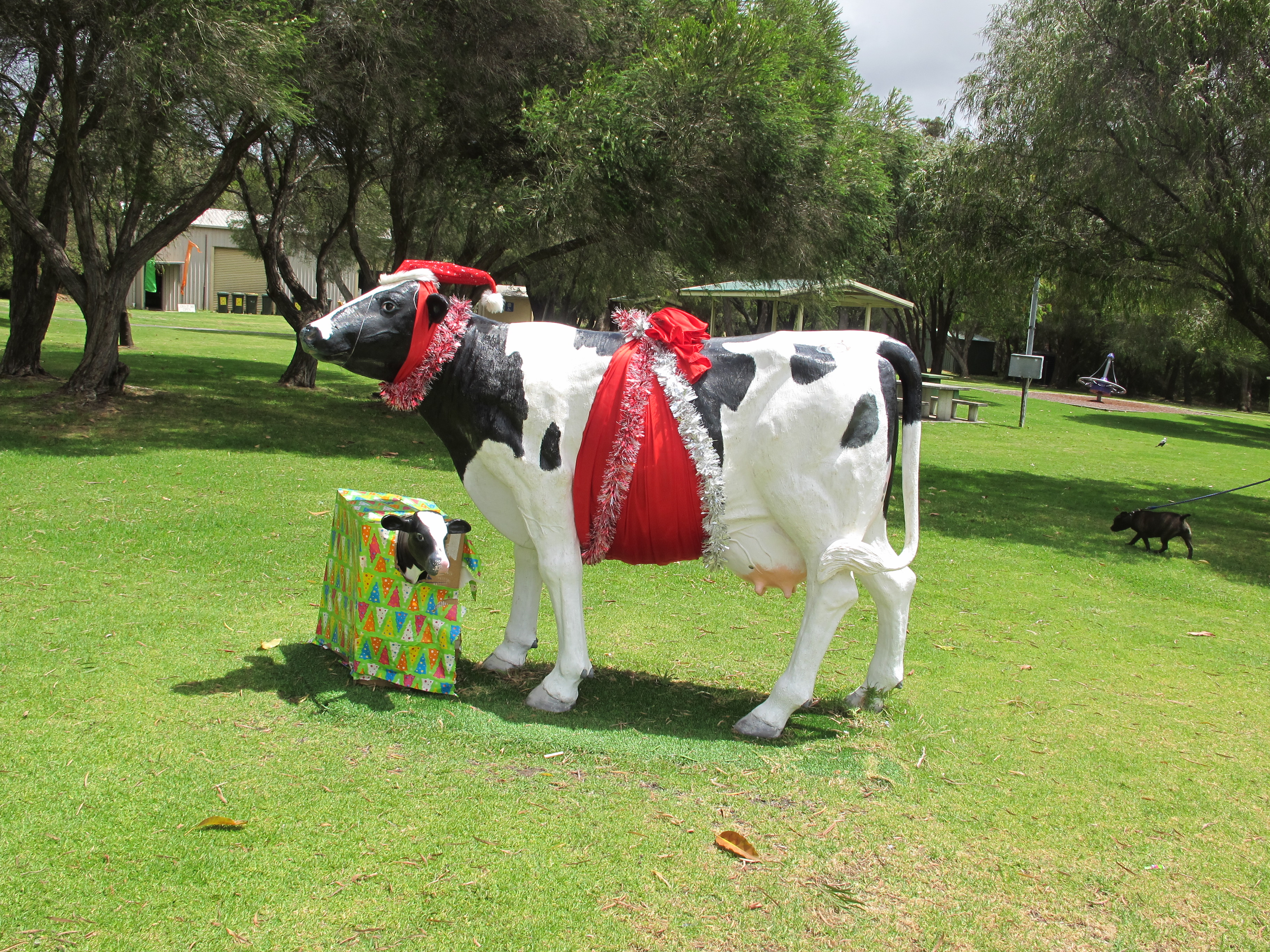 Christmas Cows Cowtown christmas cows.