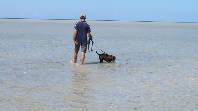 Whyalla South Australia - Low Tide With Dog