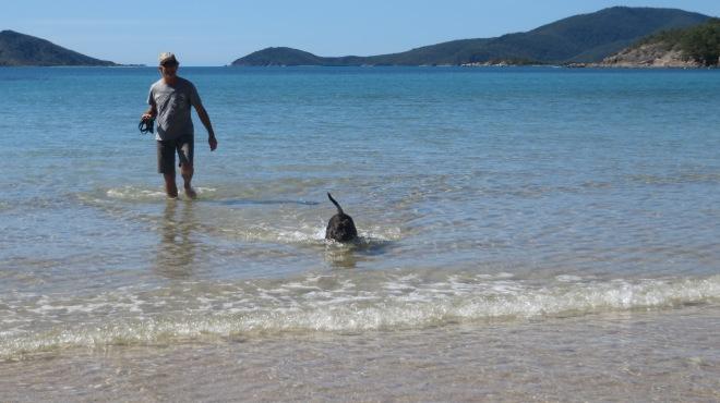 Bob The Dog at the beach.