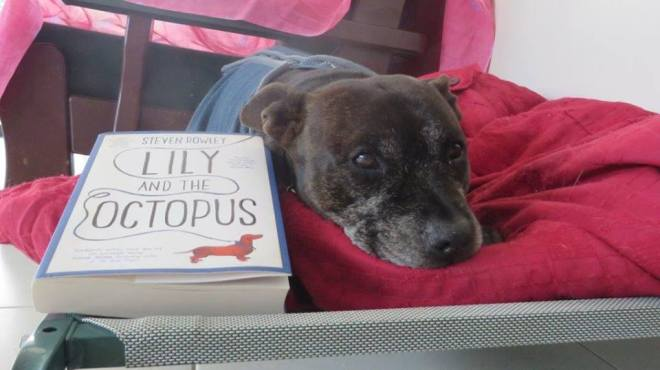 Bob teh Dog reads Lily and The Octopus